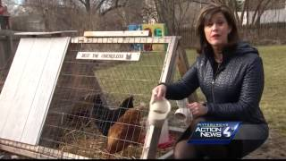 Farm fresh eggs available for rent in the city