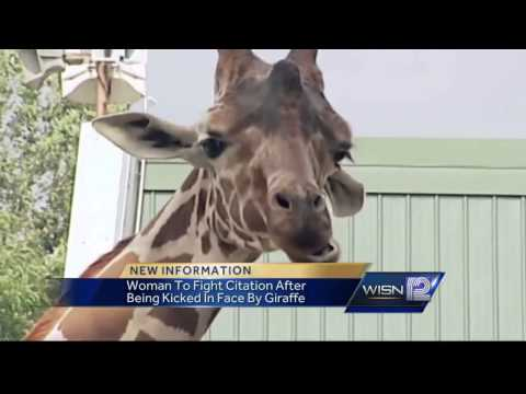 Thumbnail: Woman kicked in face by giraffe say police have nerve giving her ticket