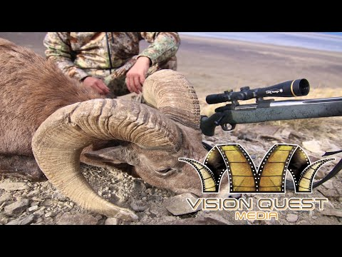 Long Range California Bighorn Hunt