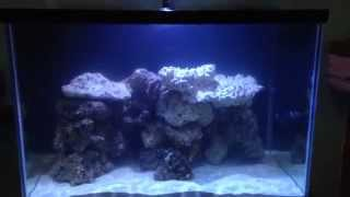 90 Gallon Reef Aquarium & 20 Gallon Diy Sump (new Setup)