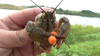 Ловля раков на пирамидки(Дневник рыболова) Catching crabs on the pyramid