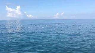 видео Как отдохнуть на Черном море дикарем