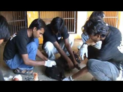 Street Animal Rescues with Animal Aid - Animals Rescued  Ep 151