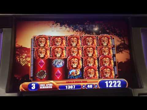 King of Africa Slot Super Big Win Bonus! 🦁🔥💰