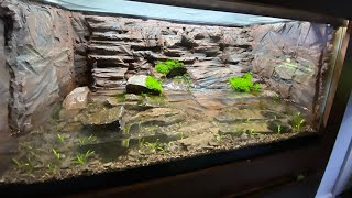 Paludarium DIY - Cave Habitat for new Amphibian Species
