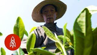 The Secret Behind the World's Best Green Tea