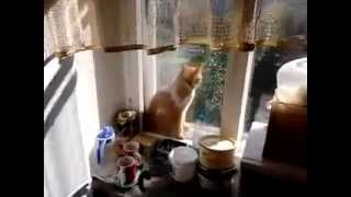 Кошка застряла между окон