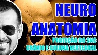 Vídeo Aula 076 - Neuroanatomia: Proteção do Sistema Nervoso Central pelo crânio e coluna vertebral