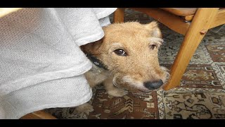 BF Animal Gallery | You Needed Me with Lyrics | BF Channel