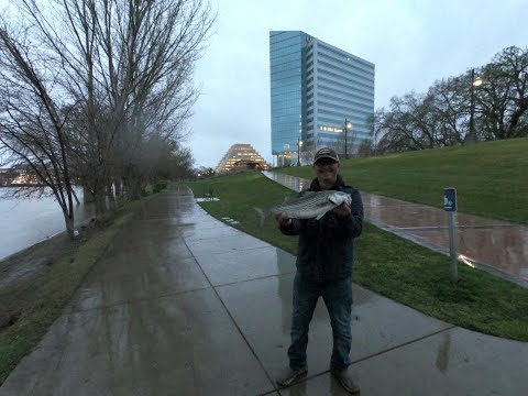 West Sacramento River Front Bank Fishing Part 7 More Stripe Bass Action