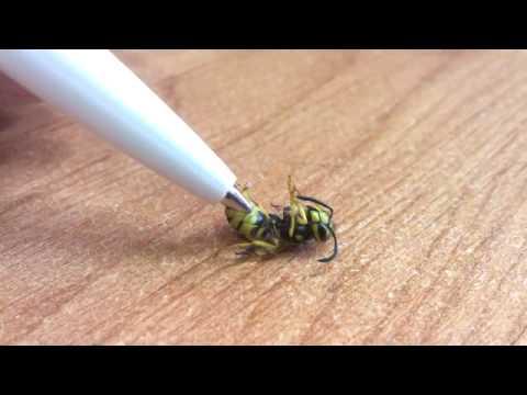 Жало осы