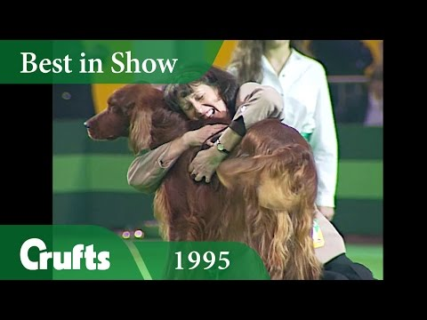 Irish Setter wins Crufts Best in Show at Crufts 1995 | Crufts Classics