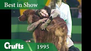 Irish Setter wins Crufts Best in Show at Crufts 1995 | Crufts Classics