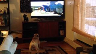 Cash the french bulldog watching Turner and Hooch