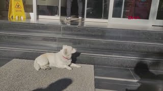 Dog spent days outside Turkish hospital waiting for sick owner