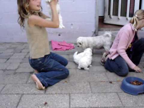 hundetrimmer frederikssund