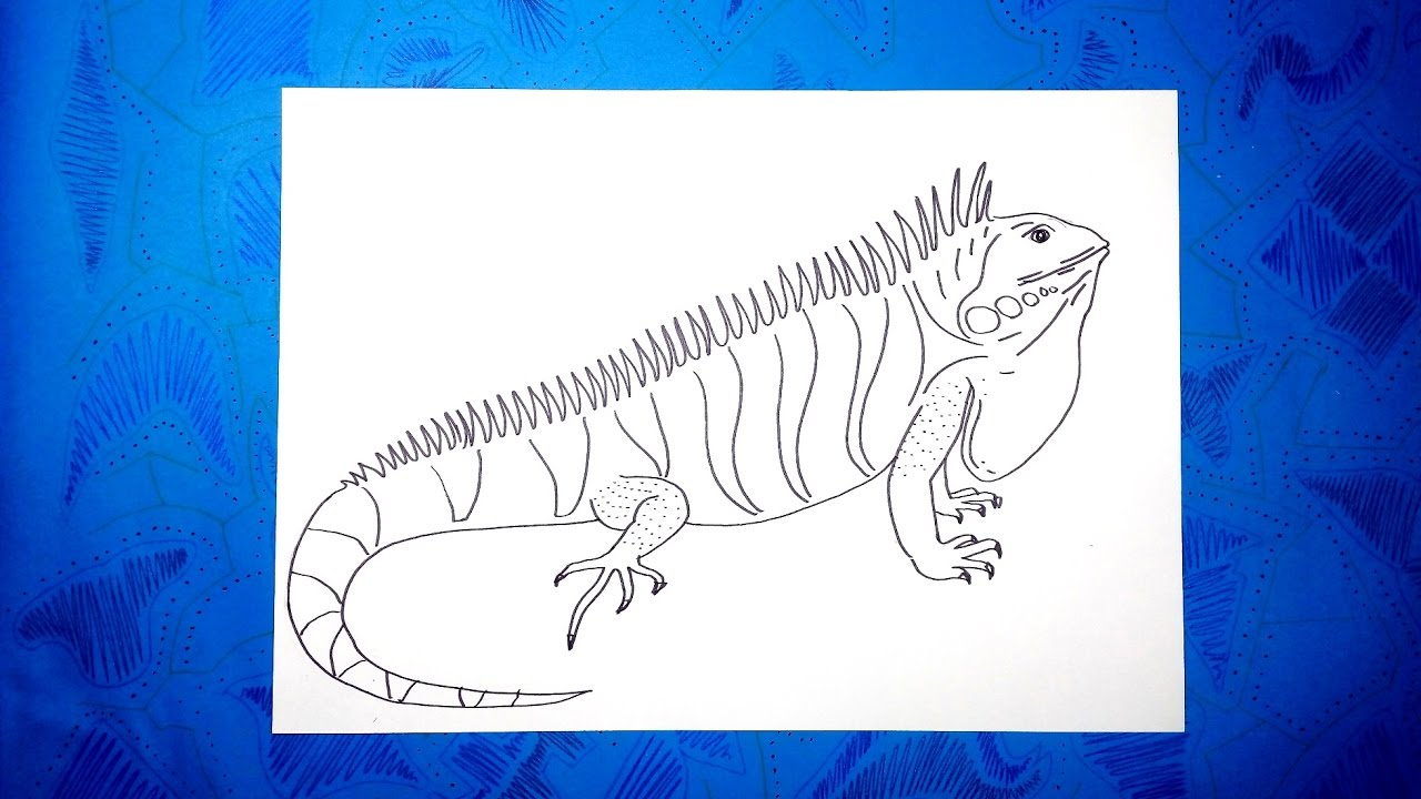 Cmo dibujar una iguana fcil paso a paso  YouTube