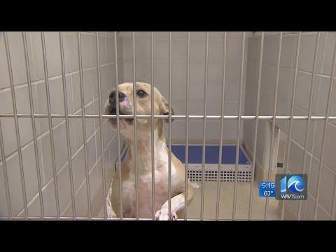 Virginia Beach Animal Shelter Sees Spike In Dogs
