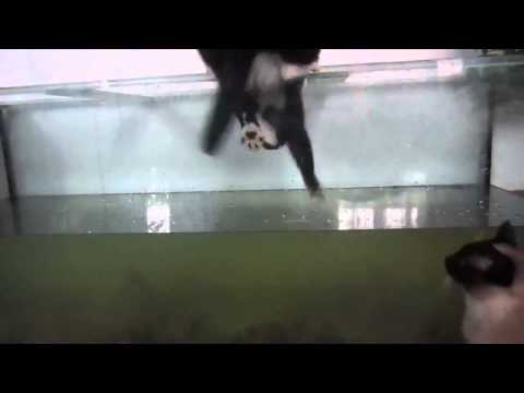Cat fell into aquarium ( Cat Fail }  Funny Cat Video