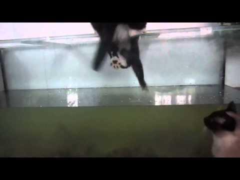 Cat fell into aquarium ( Cat Fail }  Funny Cat Video
