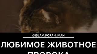 Любимое животное Пророка нашего