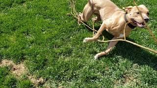 SEPR Wynn does yard work