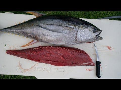 EXPENSIVE $1000  Tuna! Catch n Cook- Yellowfin Tuna Fishing (Ahi)