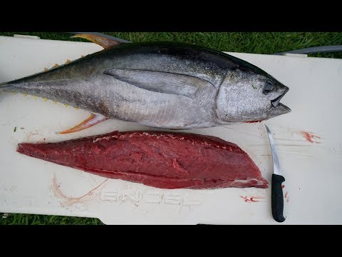 Tuna RUINED with Lactic ACID! Catch n Cook- Yellowfin Tuna Fishing (Ahi)