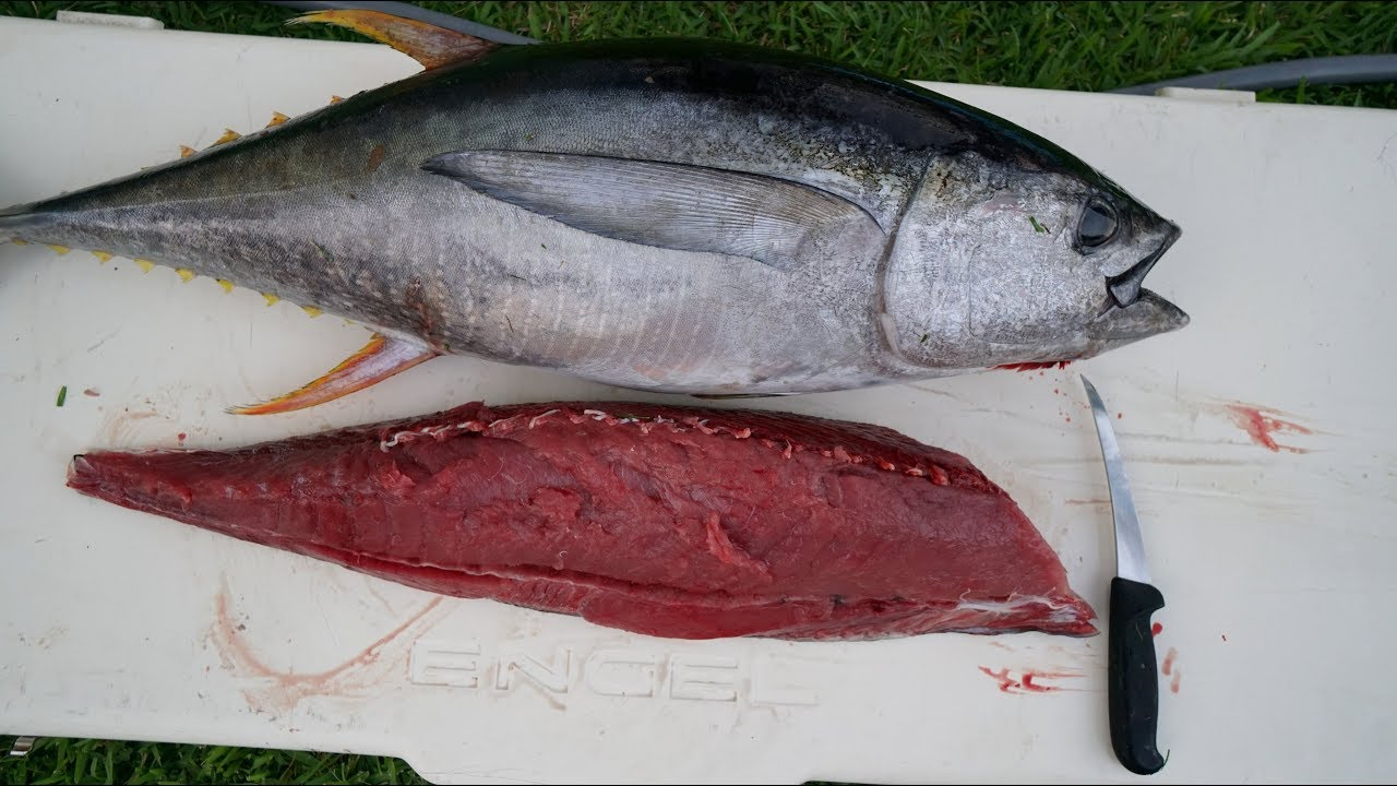 small resolution of catch n cook yellowfin tuna fishing ahi