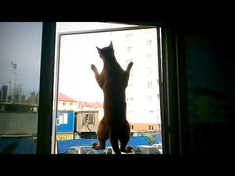 Funny Cat Fails 😂 Epic Cat Fails (Full) [Epic Life]