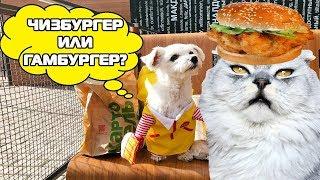 Что выберет кот: ЧИЗбургер или ГАМбургер?