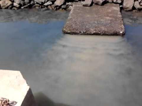 Resultado de imagem para esgotos na ria formosa em OLhão