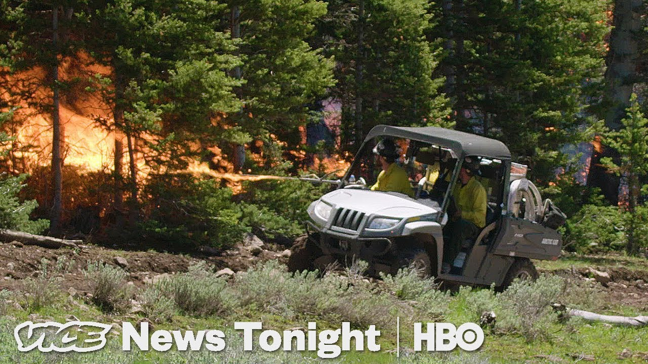 Watch The Forest Service Burn Down A Forest For Science
