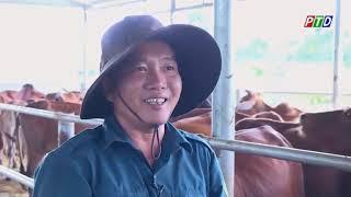 Thu lãi hàng trăm triệu đồng nhờ mô hình nuôi bò