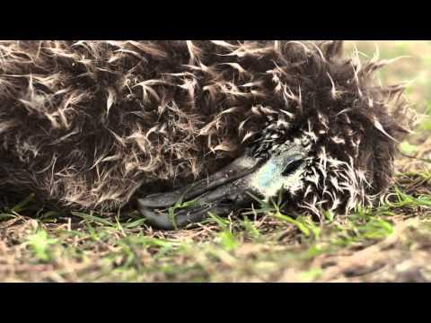 MIDWAY   a film by Chris Jordan
