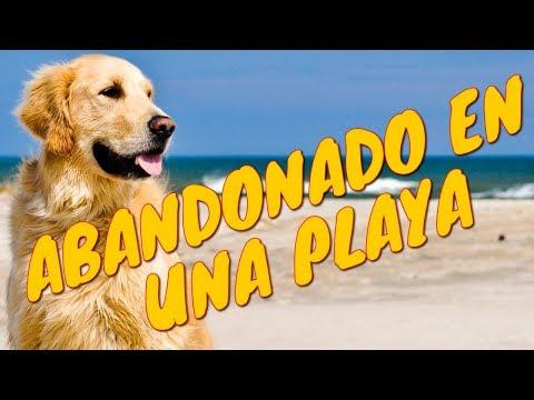 El Perrito que Nino conoció en la playa | Tu Mascota TV