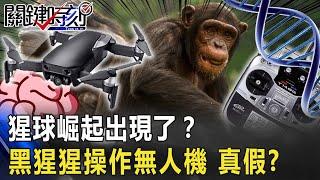 「猩球崛起」出現了?!黑猩猩「操作無人機」影片瘋傳 真假?!【關鍵時刻】20200625-3 劉寶傑 賴憲政