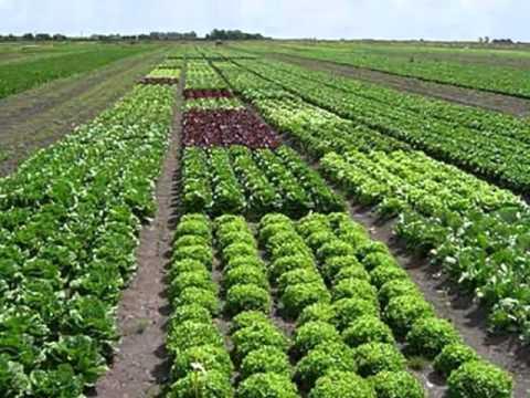 El paisaje agrario y sus elementos los sistemas de cultivo for Que es una mesa de cultivo