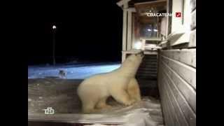 Медведь бросился на женщину