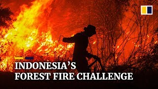 Indonesia's forest fire challenge