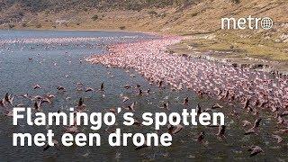 Bij Lake Shala en Chitu in Ethiopie flamingo&#39s filmen