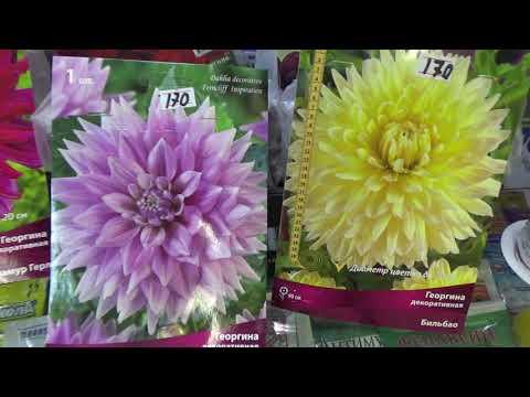 Покупаем луковичные,клубневые многолетние цветы.