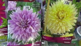 видео Лучшие луковичные цветы-многолетники для сада