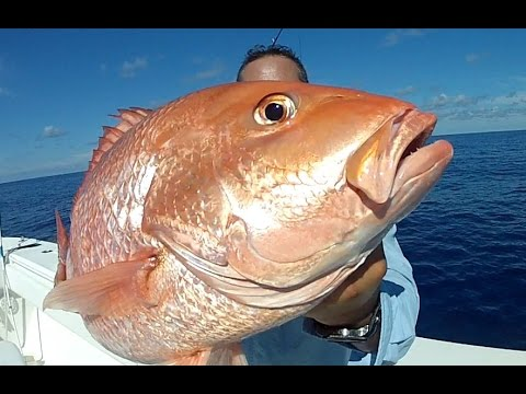 100+ Mile Run Offshore fishing American Red Snapper (ARS)