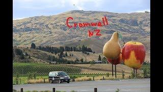 Новая Зеландия. Кромвелл, поссумы, лавандовая ферма... Люди, кони- всё смешалось :D