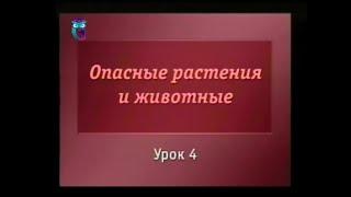 Биология. Урок 4. Ядовитые грибы России. Часть 2