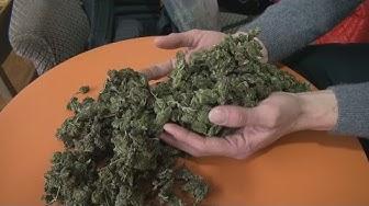 Cannabis en vente libre à Lausanne