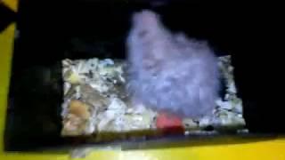Мой новый питомец хомячок. Урааааа!!!/ Софья Pets