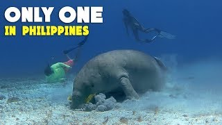 Swimming with DUGONG.. The Rarest Animal in Philippines