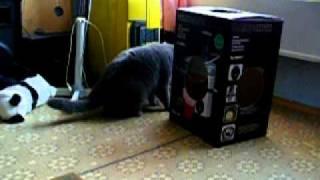 Еще кот и домовой